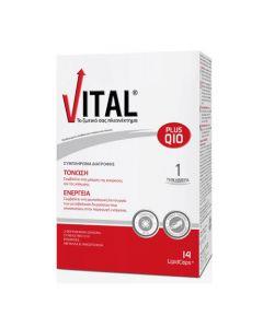 Vital Plus Q10 14 Caps
